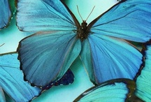 Birds & Bees / Butterflies, Insects / by Jacquelyn Kimball