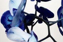 Palette: China Blues