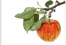 Botanical Edibles / Inspirational Fruit & Vegetable Art / by Jacquelyn Kimball