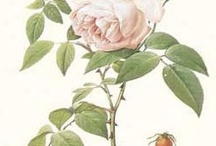 Botanical / Inspirational Floral Art / by Jacquelyn Kimball