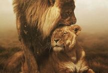 Lions / by Not Just Another Milla