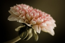 floral / by Helene Ekblom