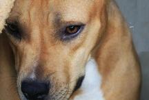 doggie stuff / by Trenessa Dammann