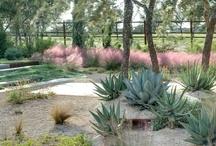 Landscape Design and Plants