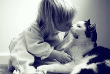 Cats / Cats of different breeds, shapes and sizes. We love them all! / by Pets Insure Together