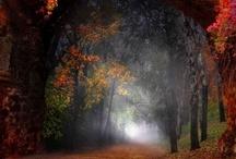 Deep Forest / by Satoru Takeuchi