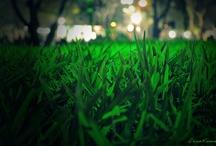 Golf Lawn / by Satoru Takeuchi