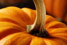 For Fall Ya'll / by Cindy Rhoden
