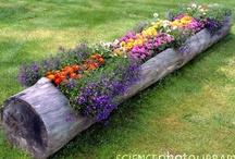 Return to Eden- garden & yard / by Doralee Fritz