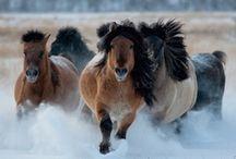horses / by Debbie Hiles
