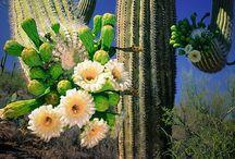 Arizona  / by Stacey Biondolillo