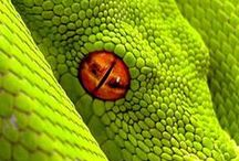 snakes / by Debbie Hiles