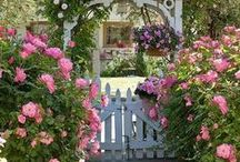 Hobbies:  Gardening / by Penny Mansell