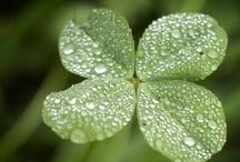 Holidays: St. Patrick's Day