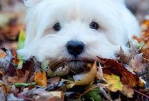 Dogs / by Lori Wilk