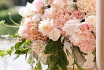 Blush Wedding / Romantic, feminine and elegant ideas for a spring blush wedding. To view wedding flowers by Signature Bloom, visit us at www.signaturebloom.com | florist in San Jose, CA | Please note that images on this board are owned by their original owners, you can view the source by clicking on the picture twice.