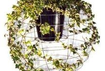grow / patio garden  / by Mary Merritt