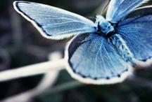 Blue heaven / by Sweet Amaranth »» Seattle, WA » Beautiful, Body-Positive Portrait Photography