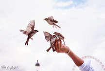 Winged / by Sweet Amaranth »» Seattle, WA » Beautiful, Body-Positive Portrait Photography