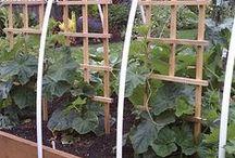 gardening / out door things
