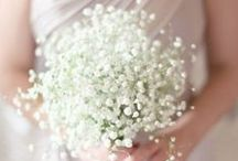 Gypsophila / Baby's Breath