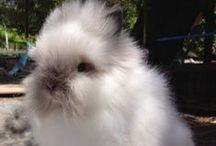 for the love of bunnies / dreaming of a pet bunny if only i wasn't horribly allergic. A girl can dream thou