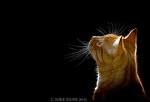 More Cats / by charina