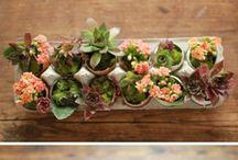 favies for gardening / by Amanda Smith