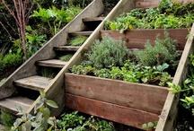 I want a garden!