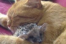 Cute Critters / by Cat B