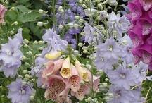 Garden - a little heaven on earth / Gardening Ideas / by Brandy Torres