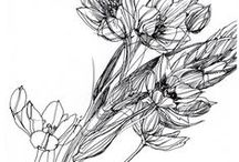 Original Nature Drawings / Exploring the architecture of nature