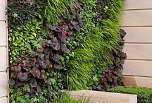 Vertical Garden/Plant Wall / by Athal Wolf