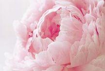 - Flower Power - / Keine Party, ohne Blumendekoraton, keine festliche Feier ohne Blumenschmuck! Flower Power rules! hier findest du schöne Blumenarrangements und Ideen für Dekorieren mit Blumen.