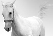 Horse / by Rosie Wonders