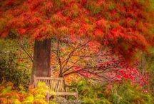 Autumn's Colorful Foliage / by Nancy Davis
