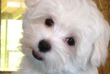 DOGS RULE!! / in memory of my kids: Cassie, Ziggy, Blaze, Chelsea, Holly, Zeus, Brady & Skyla. Rest in peace, my babies... / by Joyce Roos