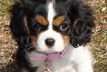 Animals - too cute not to pin / by Montie Norsworthy