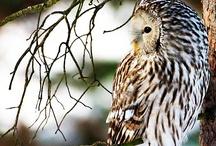 Owls / by Jasmine K