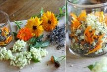 From the Earth~ wild foods & medicine / by Kady Lyons Bowman