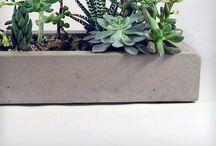 Stoere planten