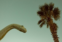RAWR! Dinosaurs / by Kevin & Robin -