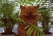 Mr. Meowgi the Cat / by Kara Gutierrez