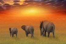 elephants <3 / by April Jones