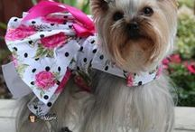 Yorkshire Terrier / by Sandy Partain-Lingle