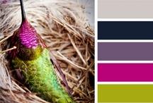 Colour schemes lllllllllll / by Nourhan Abdel-Rahman