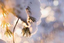 Winter Wonders / beauty in snowy days