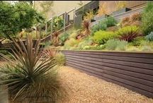 Dry gardens / Looking for low maintenance garden inspiration for my father in law. Something that has no grass, needs no water (or attention) is ideal!  / by Bloom