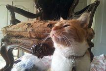 Preshy Kitties