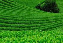 Green / green, light green, dark green, evergreen, leaf grean, bright green any picture with strong green colors